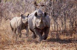 5 Animals on the Verge of Extinction