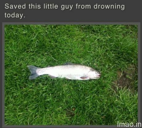 saved-fish-from-drowning humorous photos
