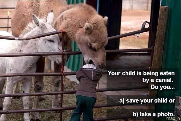 eaten-by-camel humorous photos