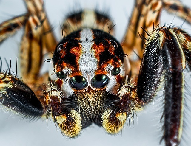 Jumping Spider - nature