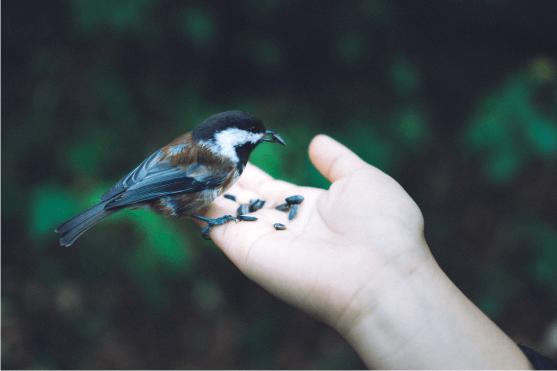 nature and bird